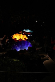 chihuly (53)