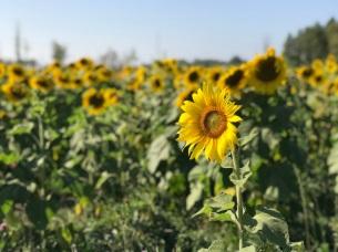 sun (3)