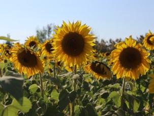 sun (7)