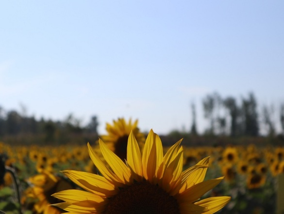 sun (8)