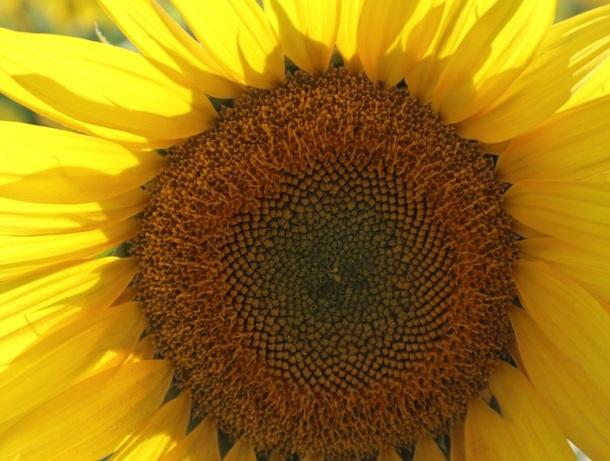 sun (9)