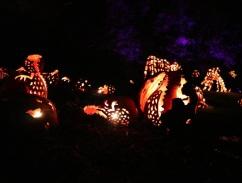pumpkin (13)