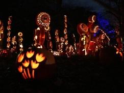 pumpkin (14)