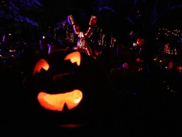 pumpkin (22)