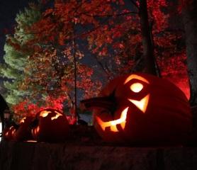 pumpkin (25)