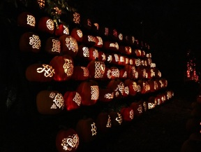 pumpkin (35)