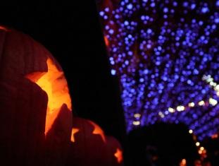 pumpkin (5)