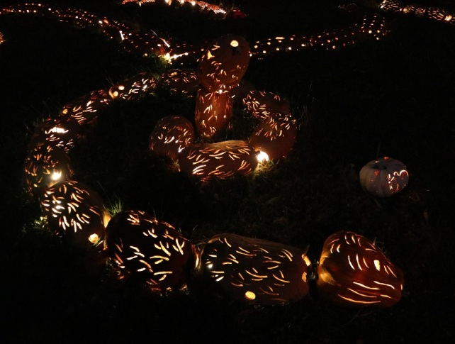 pumpkin (9)